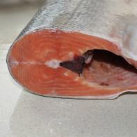 Фото рыбы кеты 3