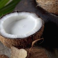 Фото кокоса 2