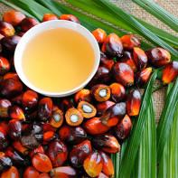 Фото пальмового масла 2