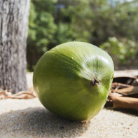 Фото кокоса 7