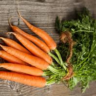 Фото моркови 2