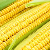 Фото кукурузы 3