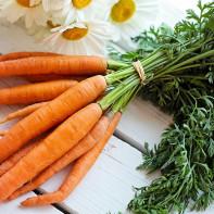 Фото морковной ботвы 4