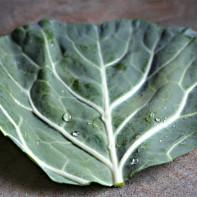 Фото капустного листа