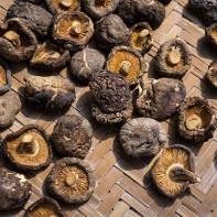 Фото грибов шиитаке 3