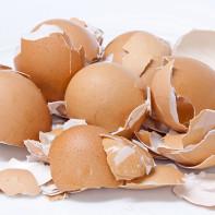 Фото яичной скорлупы 3