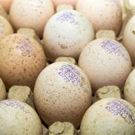 Фото индюшиных яиц 4