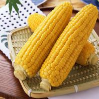 Фото вареной кукурузы 2