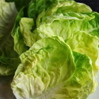Фото капустного листа 5