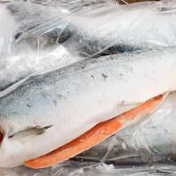 Фото рыбы кижуч 4