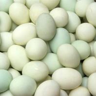 Фото утиных яиц 5