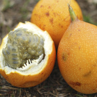 Фото фрукта гранадилла 4