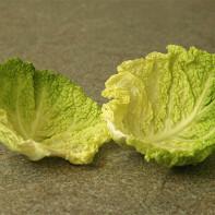 Фото капустного листа 3