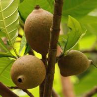 Фото фрукта генипа 3