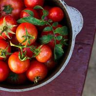 Фото томатов 5