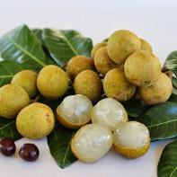 Фото фрукта лонган 2