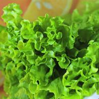 Фото листового салата 5