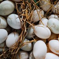 Фото утиных яиц 3