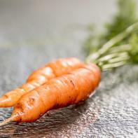 Фото моркови 4