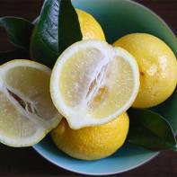 Фото лимонов 4