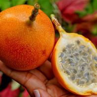 Фото фрукта гранадилла 5