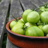 Фото зеленых помидоров 2