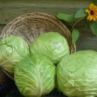 Фото белокочанной капусты 2