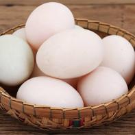 Фото утиных яиц