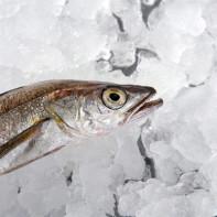 Фото рыбы хек 4