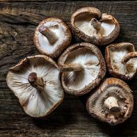 Фото грибов шиитаке 5