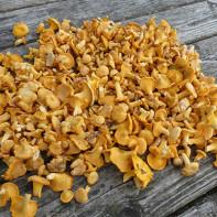 Фото грибов лисичек 3