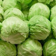 Фото белокочанной капусты