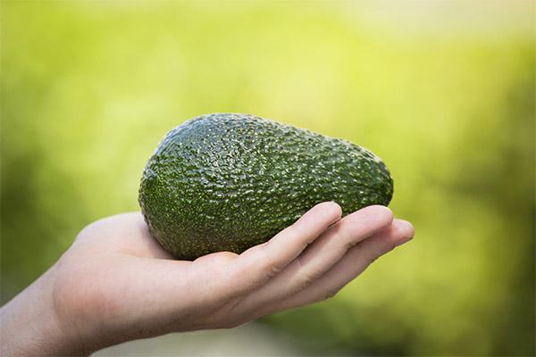 Авокадо в медицине