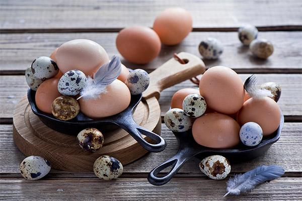 Куриные или перепелиные яйца