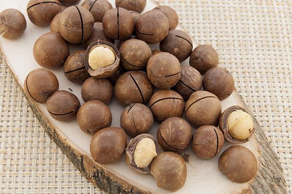 Лечебные свойства ореха макадамия