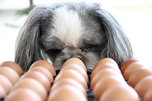 Можно ли давать куриные яйца животным