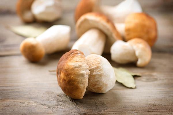 Польза и вред белых грибов