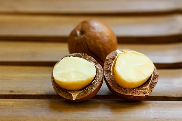 Польза ореха макадамия для женщин