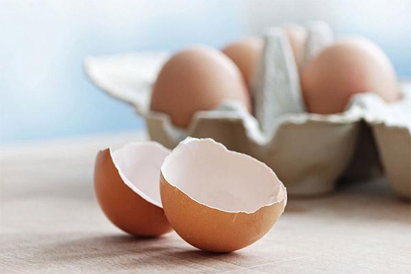 Польза скорлупы куриных яиц