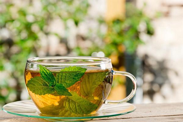 Чай с мелиссой в медицине