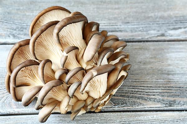 Чем полезны грибы вешенки