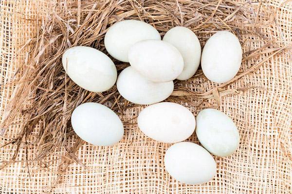 Интересные факты об утиных яйцах