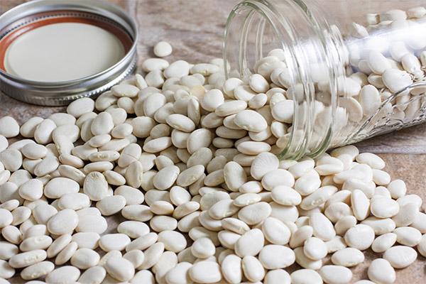 Как выбрать и хранить белую фасоль