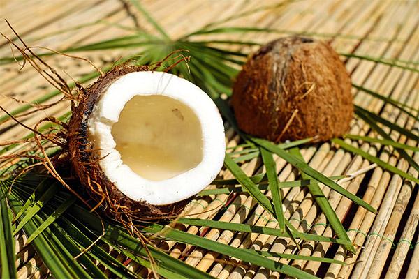Можно ли есть кокос при похудении
