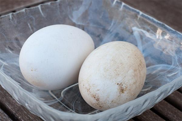 Применение гусиных яиц в косметологии