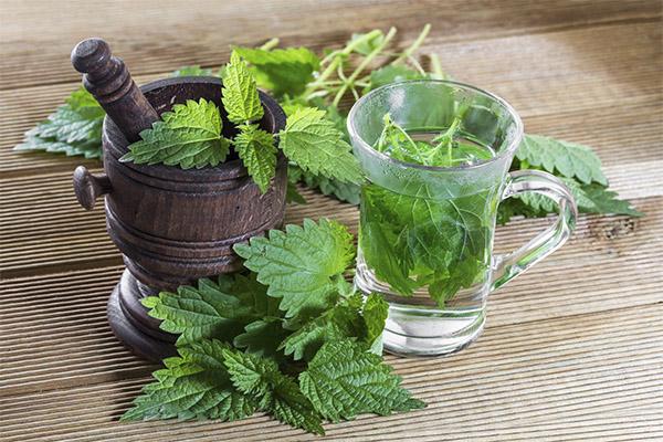 Противопоказания чая из листьев крапивы thumbnail