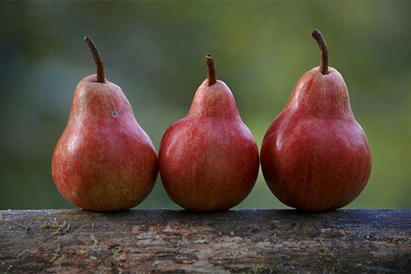 Интересные факты о грушах