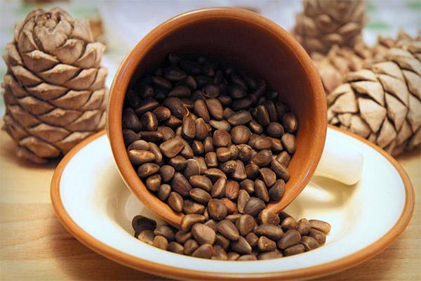 Как добыть кедровые орехи из шишки