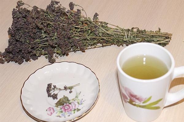 Полезные свойства чая из душицы