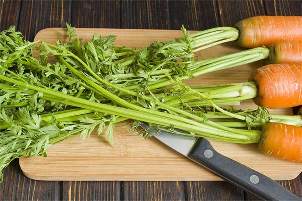 Польза ботвы моркови